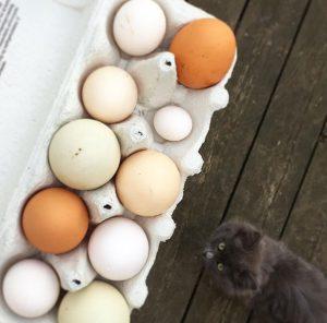 æg i forskellige former